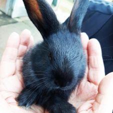 Cuccioli coniglio vendita-adozione Torino