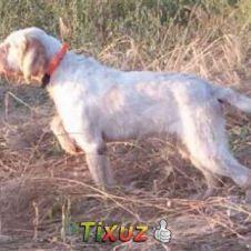 cani pronta caccia Ascoli Piceno