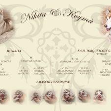 Vendo cuccioli di SIberian Husky con pedigree Ascoli Piceno