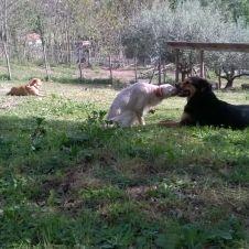 pensione cani Roma
