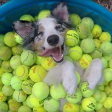 50 palle palline da tennis usate per far giocare i cani Roma