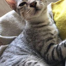 Gattino adozione Roma