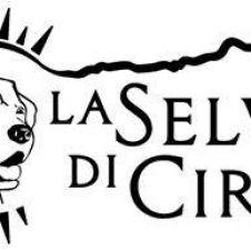 Allevamento professionale di Labrador Retriever,pensione e educazione cinofila Latina