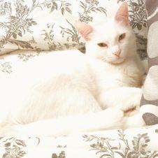 Gattina bianca e dolce Frosinone