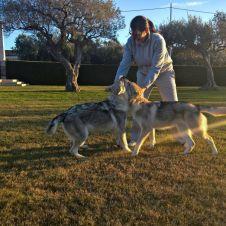Cuccioli di cane lupo cecoslovacco Ezechielelupo Chieti