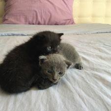 Gattini cercano casa Napoli