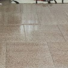 Cucciolo con pedigree da All.to riconosciuto) Avellino