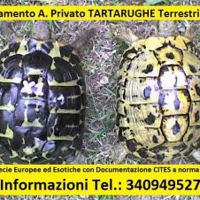 TARTARUGHE Terrestri - Tutta ITALIA Taranto