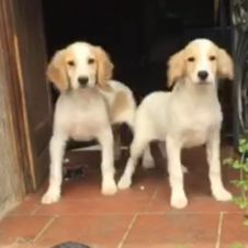 Cuccioli cercano famiglia Reggio di Calabria