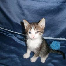 Regalo adorabili gattini Palermo
