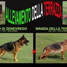 Pastore Tedesco Messina