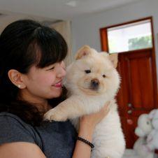 sono disponibili cuccioli di Chow Chow. Catania