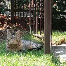 Gatto cerca casa con giardino Como