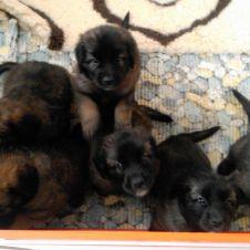 Annunci animali regalo cerco e vendo cucciolo cane gatto for Cerco camera da letto in regalo milano