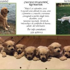 Cuccioli di Golden Retriever Milano