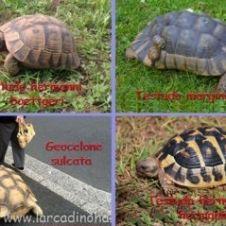 tartarughe di terra Milano
