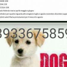 pensione domestica per cani senza gabbie Pavia