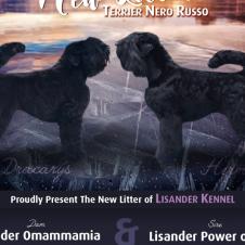 Cuccioli Terrier Nero Russo Cremona