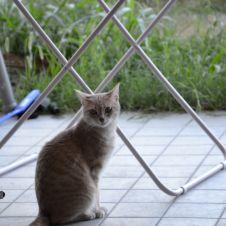 Gattina cerca casa Venezia