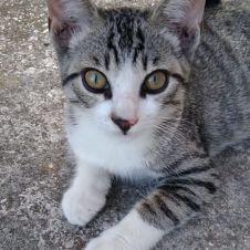 Gattini in adozione Padova