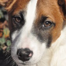 JACK RUSSELL Piacenza