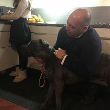Regalo cucciolo di 8 mesi di cane corso grigio bellissimo Piacenza