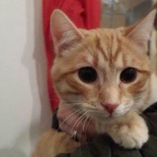 Gattini di 4 mesi cercano casa Parma
