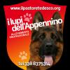 Vendita cuccioli di Pastore Tedesco  Bologna