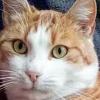 Nathan 1 anno gatto rosso dolcissimo fiv positivo a Ferrara Ferrara