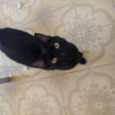Cat sitter Pisa  Pisa