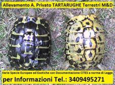Allevamento A. Privato TARTARUGHE Terrestri M&D Taranto