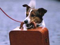 Arriva l'estate. cosa fare? come portare i cani con noi?