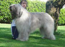 Annunci razza cane taglia grande pastore dell 39 asia centrale for Cane da pastore della russia meridionale