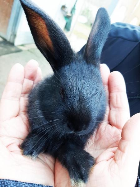 Cuccioli coniglio vendita-adozione Torino - Annunci Zampettando