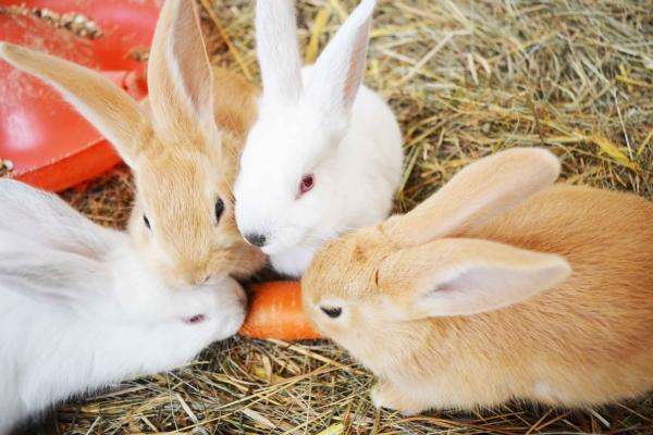 Cuccioli coniglio vendita-adozione Torino id. 17420