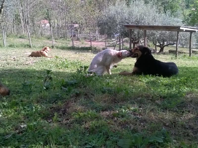 pensione cani Roma - Annunci Zampettando