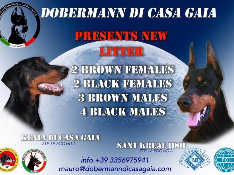 Dobermann cuccioli Roma - Annunci Zampettando
