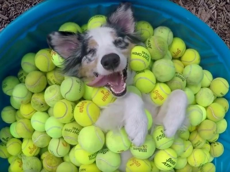 50 palle palline da tennis usate per far giocare i cani Roma - Annunci Zampettando