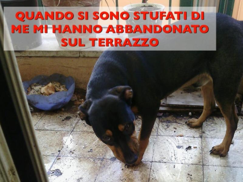 MARTI HA CONOSCIUTO SOLO IL TERRORE Roma - Annunci Zampettando