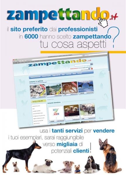 annunci animali gratis  Roma - Annunci Zampettando