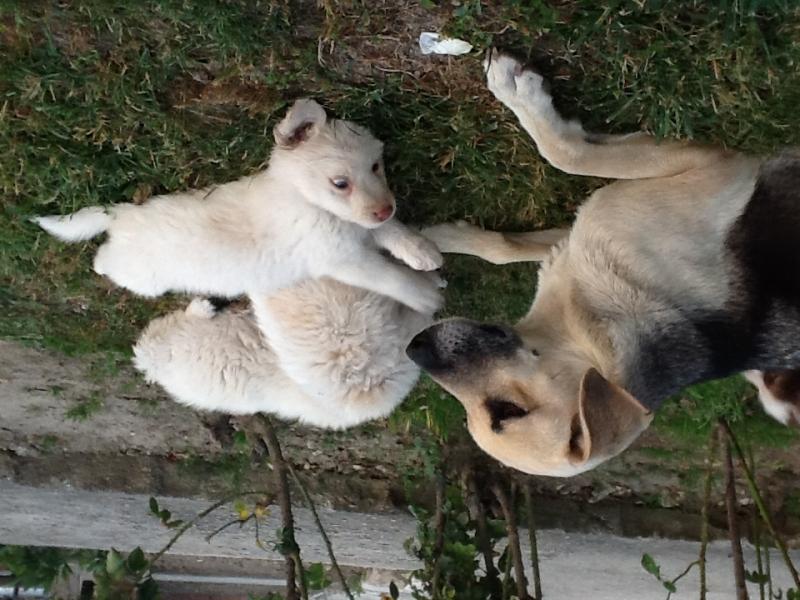 Cuccioli cercano casa! Roma id. 14363