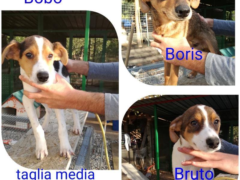 Mix beagle cuccioli Roma - Annunci Zampettando