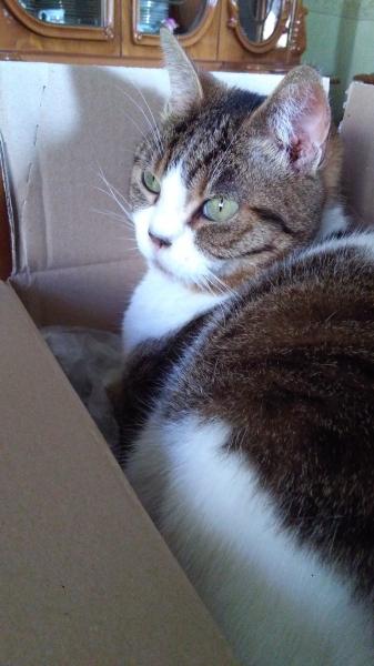 Cat sitter Napoli Vomero Napoli id. 16224