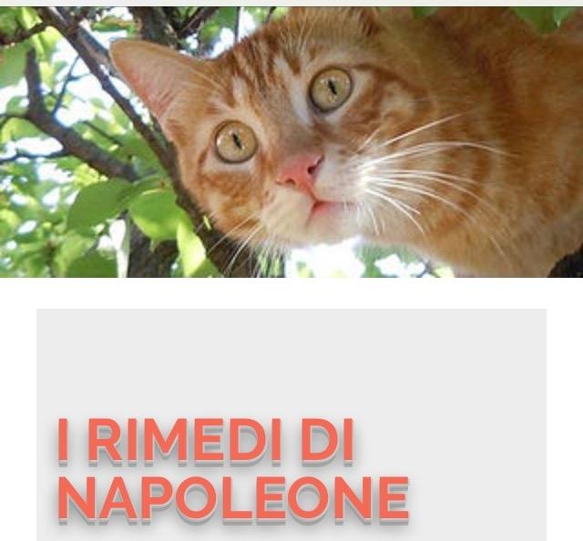 Consulenza online Reggio di Calabria - Annunci Zampettando