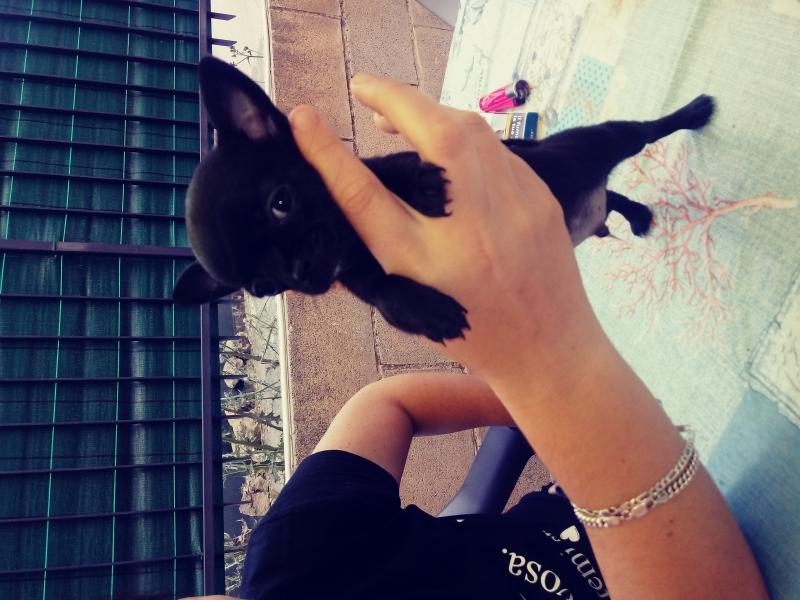 Chihuahua Caltanissetta - Annunci Zampettando