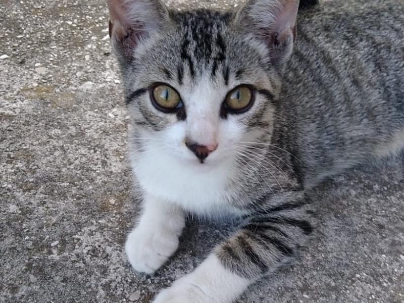 Gattini in adozione Padova - Annunci Zampettando
