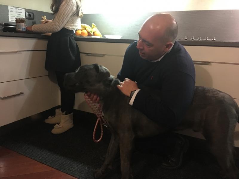 Regalo cucciolo di 8 mesi di cane corso grigio bellissimo Piacenza - Annunci Zampettando