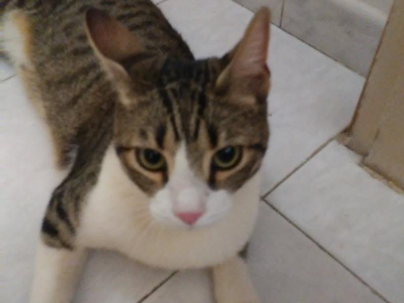 Cat sitter Pisa  Pisa id. 17115