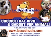 www.loscodinzolo.com