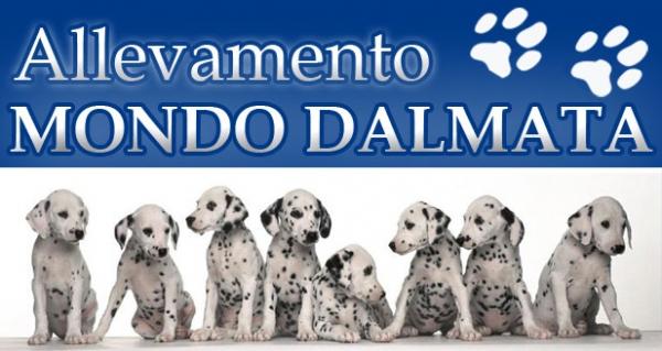 Allevamento Dalmata e pensione cani tutte le taglie Cosenza - Annunci Zampettando